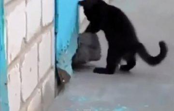 犬を助けるヒーローネコ