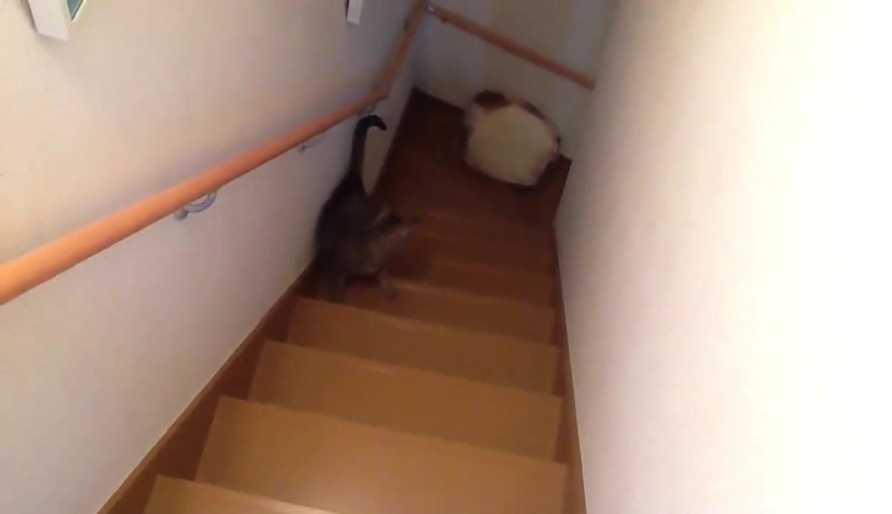階段でベッドを運ぶネコ