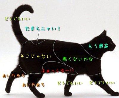 触ると喜ぶ場所 猫 ネコ ねこ