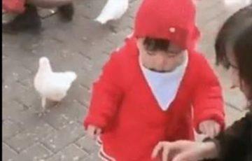 【まさにハンター】鳩がエサを奪うも子供のほうが1枚も2枚も上手だった動画が話題に!