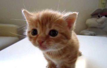 子ネコ母猫に叱られてションボリの巻