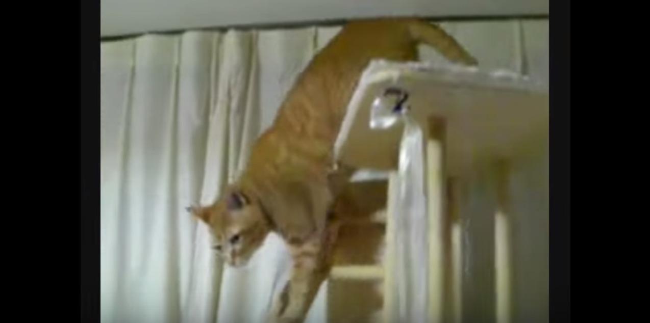 猫のモミ次お父さんと再会