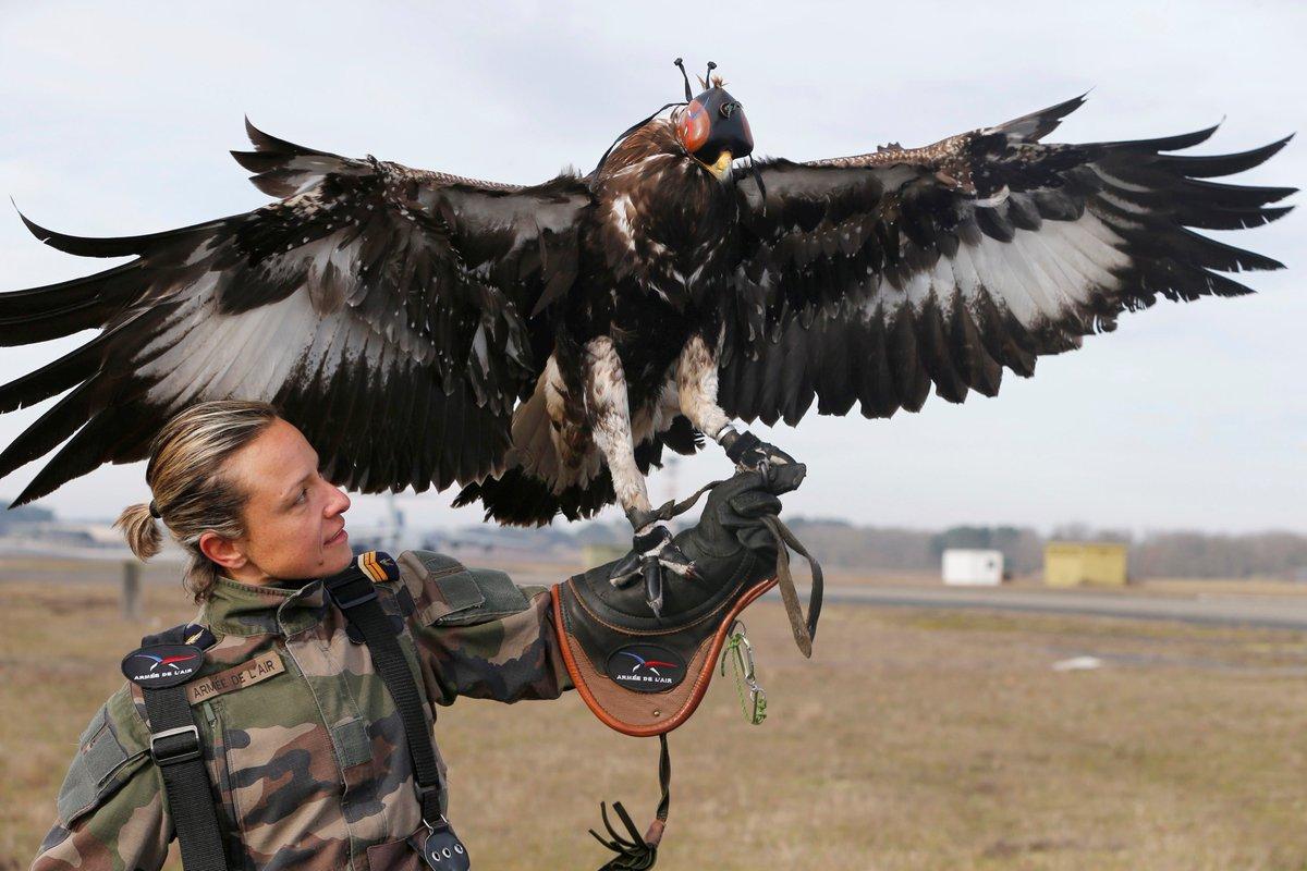 フランス空軍のドローンを狩る鷹がカッコイイと話題に!