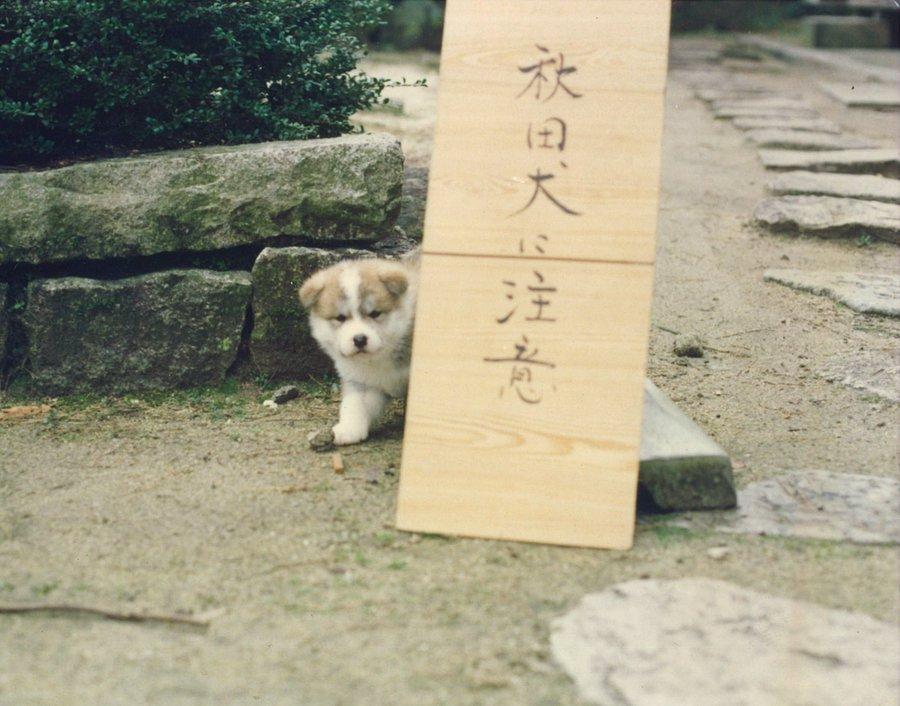 【可愛い】カメラがとらえた動物たちの「決定的瞬間」10選【面白い】