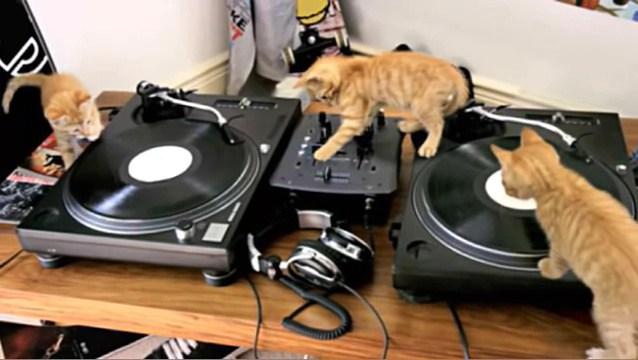 DJ子ネコ