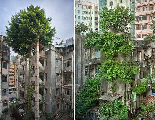然と建物が一体化した写真