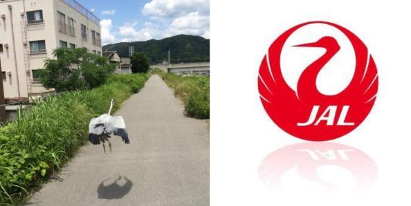 奇跡の瞬間を捉えた貴重な写真・画像まとめ:JALのロゴをリアル鶴が表現!