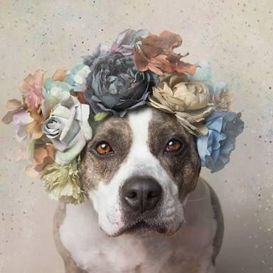 ピットブル 花と一緒に撮影した犬 殺処分