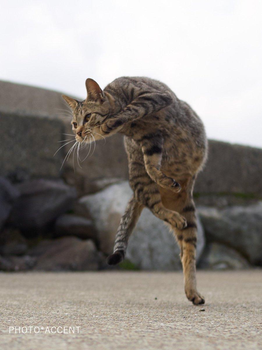 ロマサガのコマンド入力待ちのポーズをする猫が話題に!