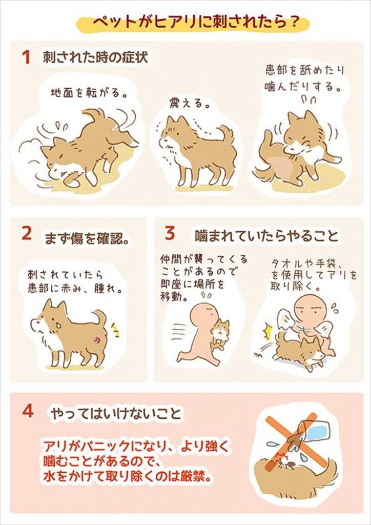 ヒアリ ペット 犬 猫 対策 対応 刺されたら