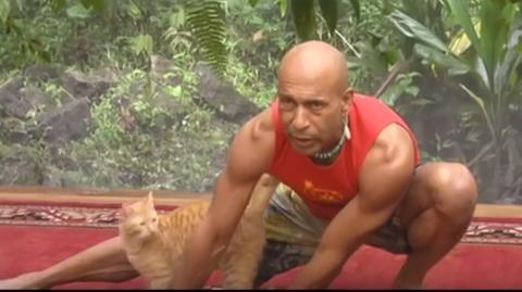 ヨガ 猫 ネコ