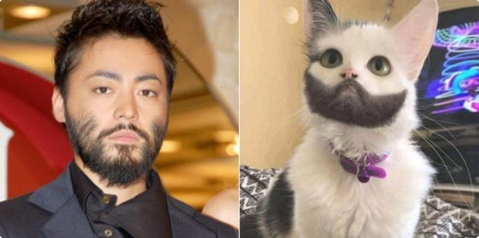 【本当に似てた!】山田孝之似の猫が見つかる!