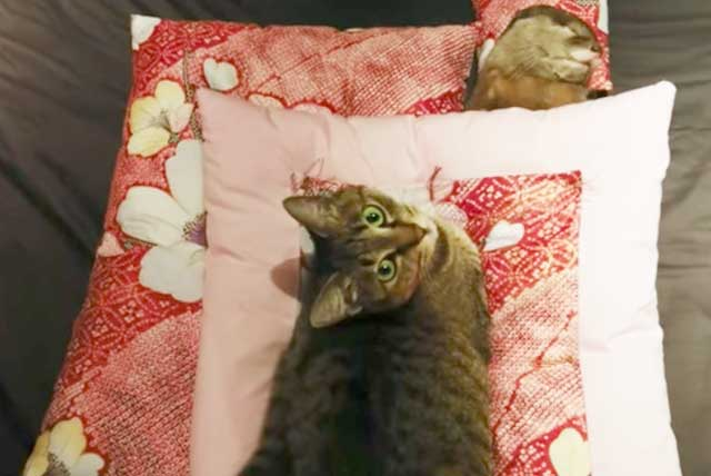 カワウソ ちいたん 猫