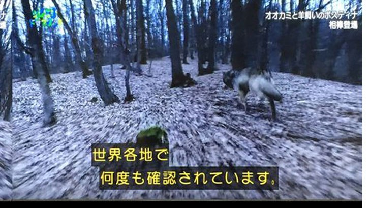 オオカミ カラス コンビ タッグ 狼