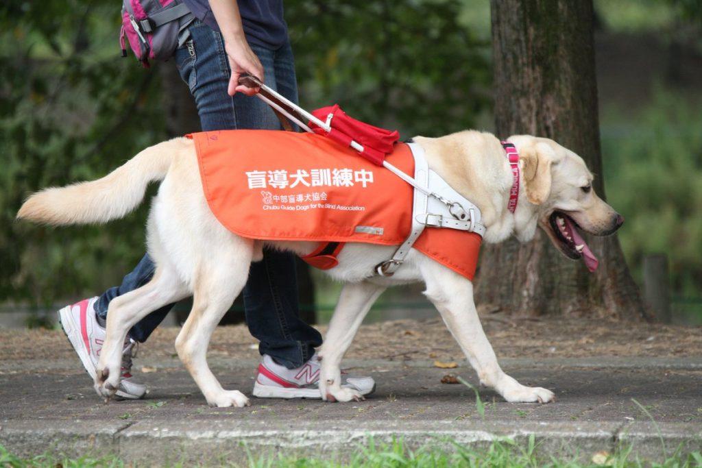 盲導犬 気を引く行為 危険