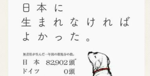 日本に生まれなければよかった犬猫の殺処分反対のポスターに反響