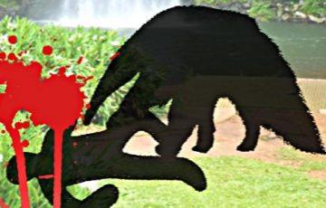 主人がオオアリクイに殺されて1年が過ぎました
