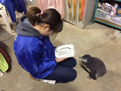 東北サファリパークのペンギンの出川さん