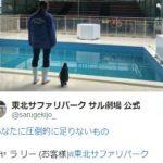 【哀愁感が凄い!】東北サファリパークの自虐ツイートが面白すぎると話題に!