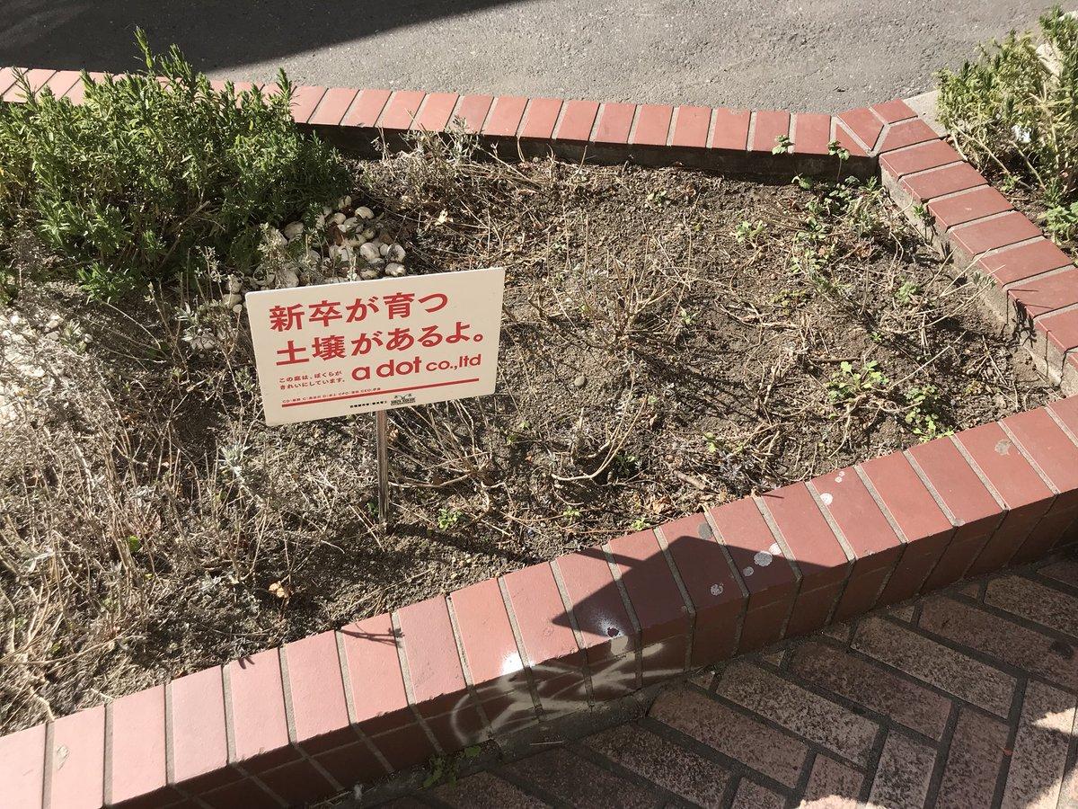 新卒が育つ土壌があるよ