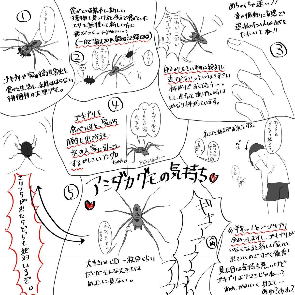 【益虫】家でたまにみかける巨大な蜘蛛「アシダカグモ」は殺さないで!ゴキブリを全滅させます!