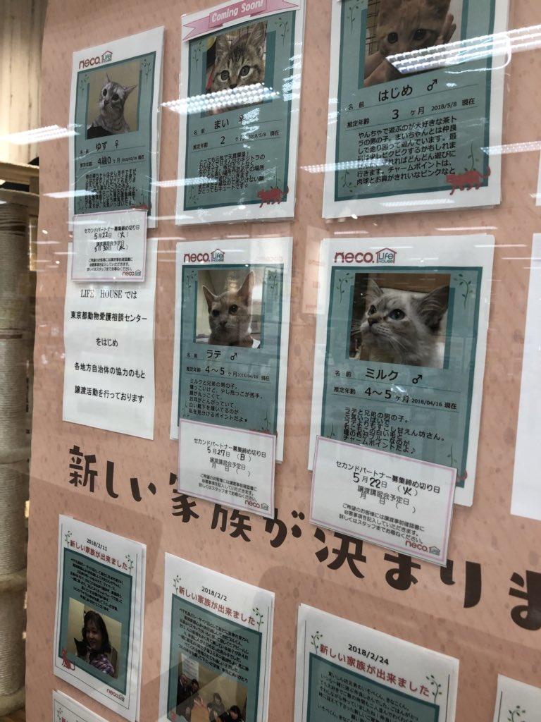 殺処分寸前の猫たちを展示スペースで遊ばせて里親を募るというイオンのペット用品売り場の取り組みが素晴らしすぎると話題に!
