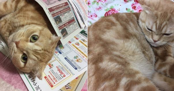 【拡散希望】大阪の地震で行方不明になったしまった猫たちの情報求む!【迷い猫】