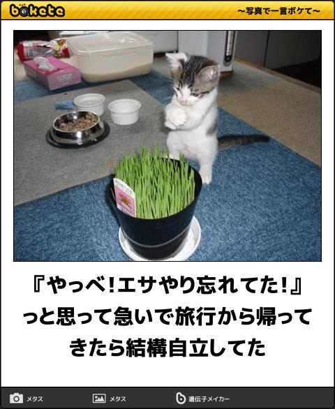 【bokete】猫がテーマの「ボケて」オススメ15選まとめ【ネコ】