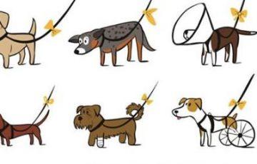 【拡散希望】リードに黄色のリボンをつけた犬を見つけたらそっとしておいてあげて欲しい【イエロードッグプロジェクト】