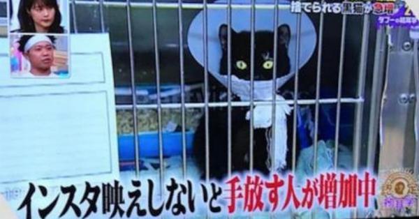 インスタ映えしない黒猫を手放す人が急増中との報道に「ペットを飼う資格ない!」