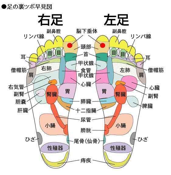 足裏と内臓(臓器)の関係の画像
