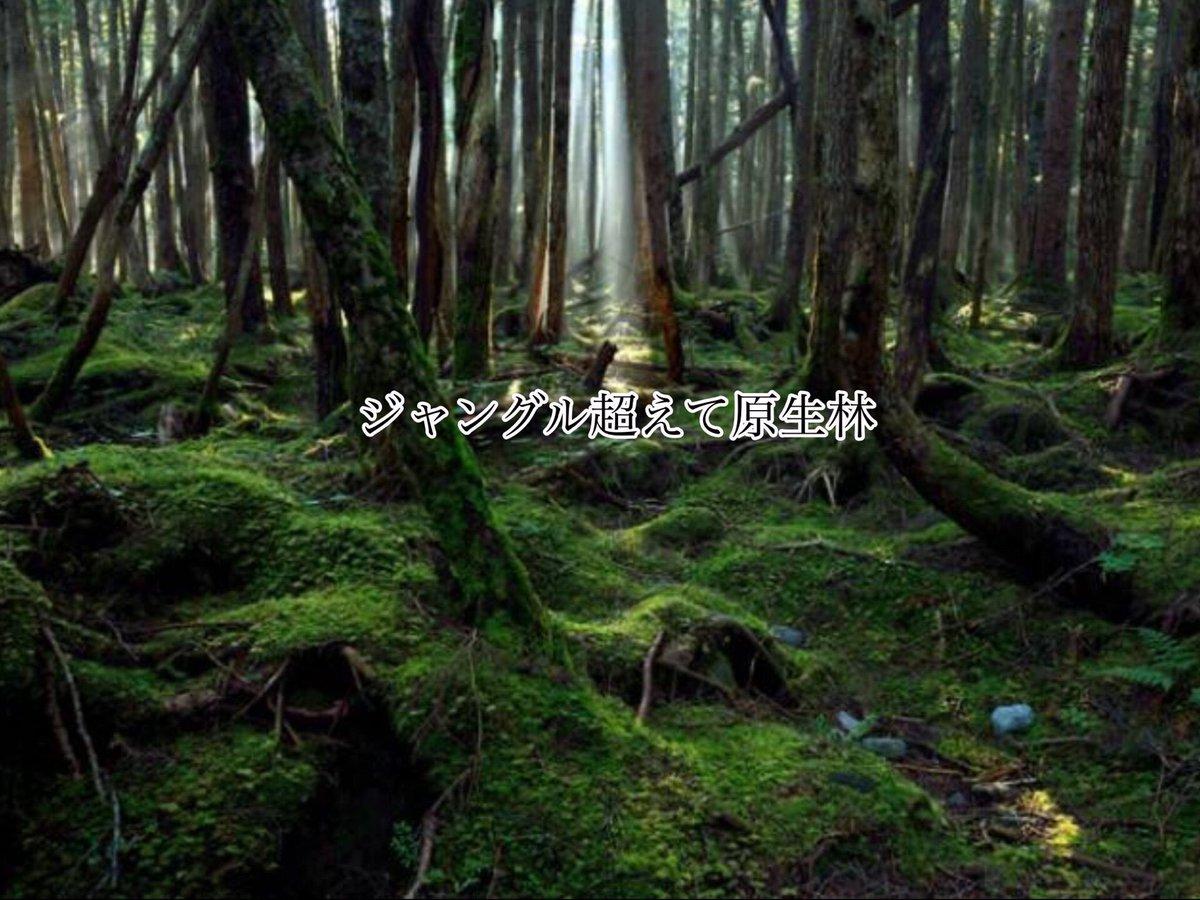 ジャングル超えて原生林