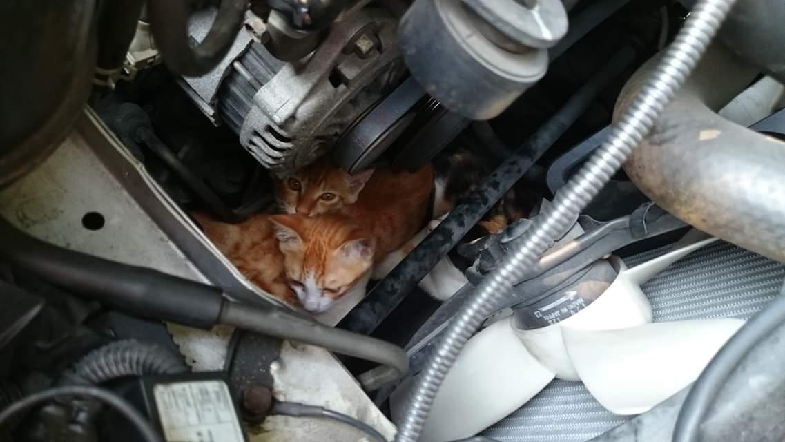 【拡散希望】今の時期猫バンバンだけでは不十分!必ず車のボンネット開けてエンジンルームに侵入してないか目視して欲しい!