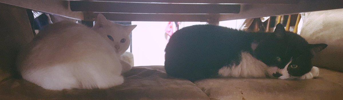 【深イイ話】ウチによく遊びに来ていた猫ちゃんの首輪に小さな手紙をつけてやりとりしてたら