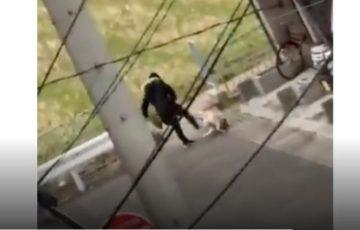 【犬を蹴るおばさん】京都でラブラドールを虐待している女の名前や顔画像、住所や自宅の特定は?動画がTwitterで拡散!零ちゃんは無事保護。