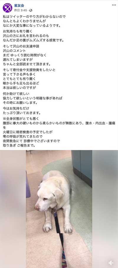 動物保護団体「紫友会」による零(レイ)ちゃん保護までの流れ