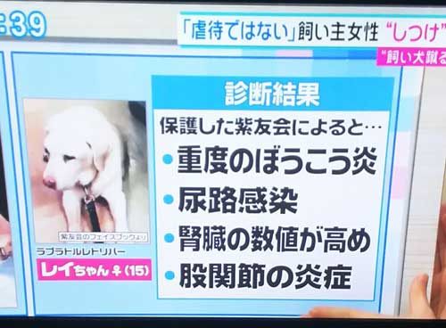 「とくダネ」での犬を蹴るおばさんに虐待された零ちゃん