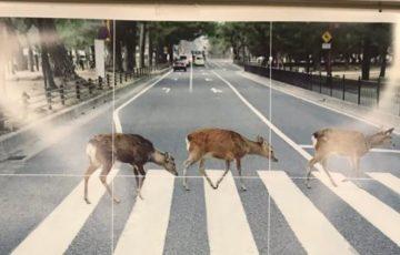 梅田駅に貼られてた奈良県の観光ポスターが切実すぎると話題にwww