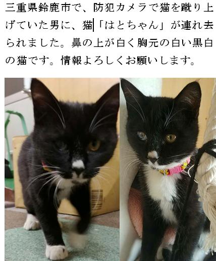 鈴鹿で連れ去られた子猫の名前は「はと」ちゃんと判明