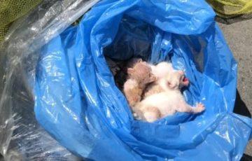 【絶対に許せない!】子猫を生きたまま袋に密封してゴミ箱に捨てた奴がいた