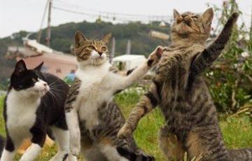 「なん」「でや」「ねん」全員でツッコミする猫が面白い!