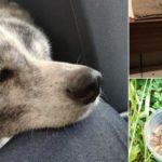【拡散希望】大阪の北鶴ふれあい公園で知人の秋田犬(4歳)が毒殺されました。犯人特定のご協力をお願いします。
