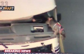 【情報量の多い動画】52歳のおばさんがキャンピングカーを盗むみ膝に2匹の犬を乗せて逃亡。