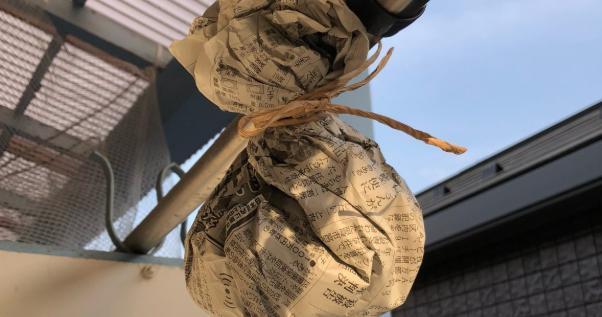 アシナガバチに巣を作らせない効果抜群な方法はこちら
