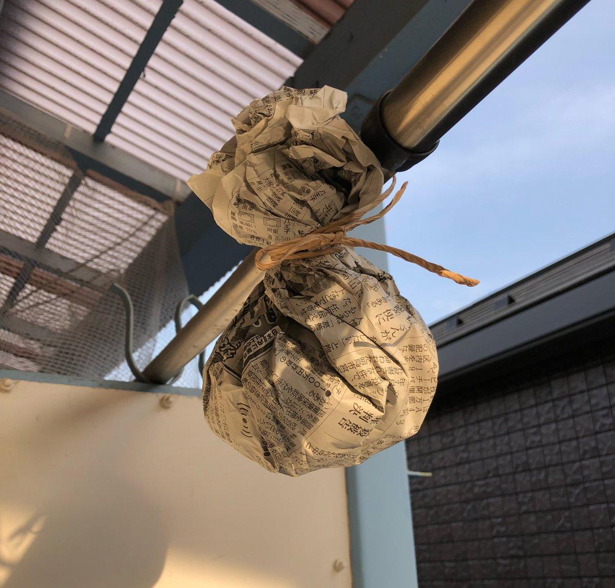 アシナガバチに巣を作らせない効果的な駆除方法はこちら
