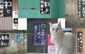 「ネコと和解せよ」の看板の意味って何?