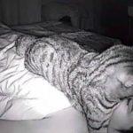 熟睡できず悩んでいた男性、監視カメラ設置で「猫が原因」と判明www