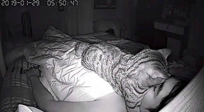 熟睡できず悩んでいた男性、監視カメラ設置で「猫が原因」と判明!