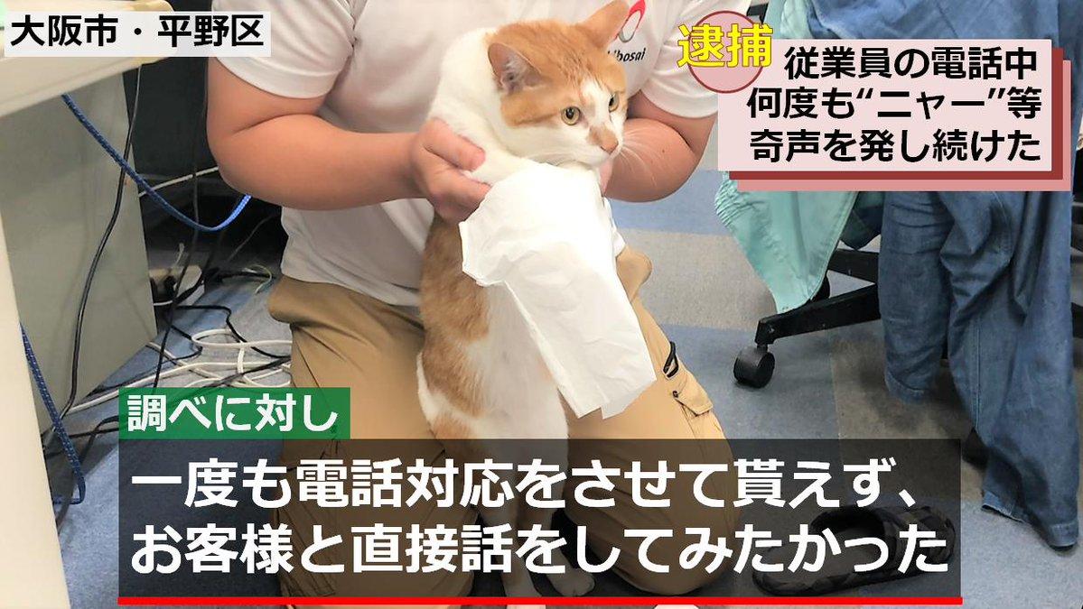 青木防災㈱の広報課長タマスケ(猫)の不祥事に関するニュース速報が面白すぎると話題に!
