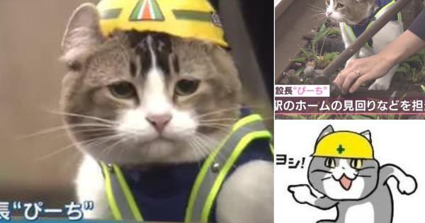 会津鉄道の芦ノ牧温泉駅のリアル現場猫「ぴーち」が可愛すぎると話題に!